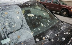 bird poop on car